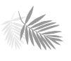 palm leave icon
